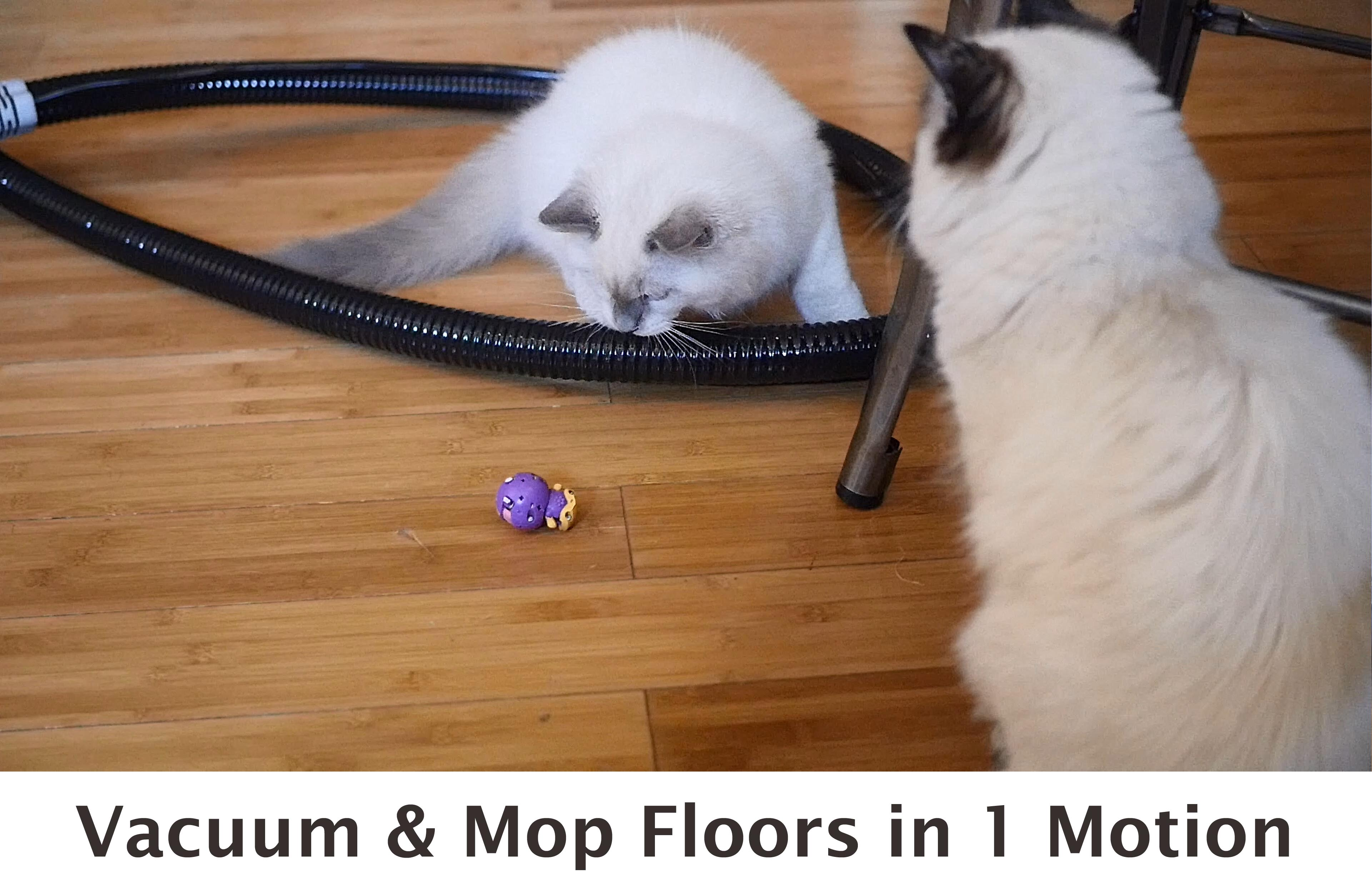 Two cats playing with toy near steam rover